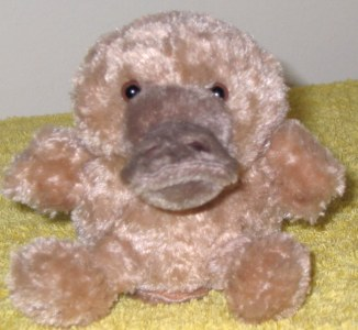 cute platypus toy, small